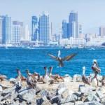 """""""Pelican Yacht Club"""" San Diego, CA"""